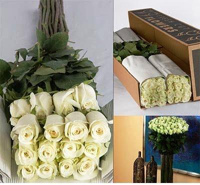 Bulk White Roses 1