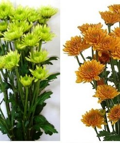 Cushion poms Flowers 1