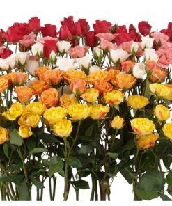 RosesSpray 2