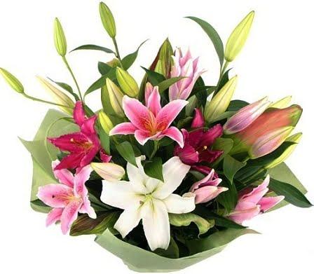 liliesoriental 1