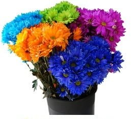 pomstintedflowers 1