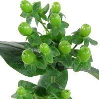 Green 6