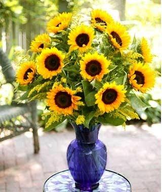 SunflowersYellow 1