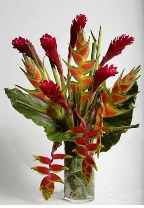 TropicalHeliconias 1