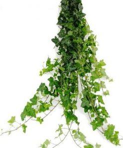 ivygreenflowers 1