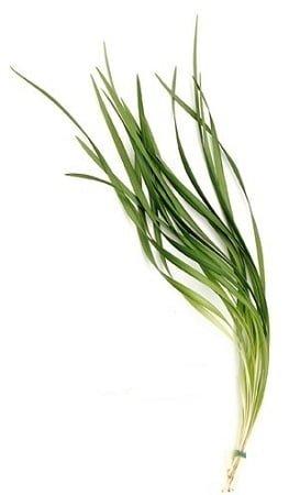 lilygrassgreenfiller 1