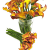 mango orange calla lilies giant