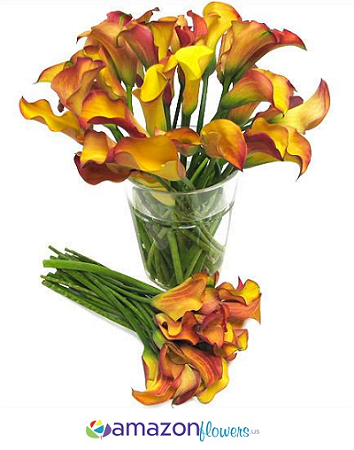 mango orange calla lilies giant