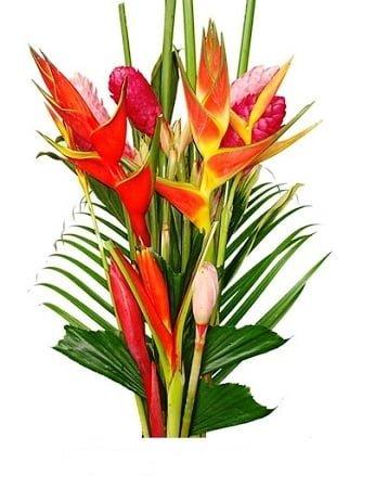 tropicalflowers 1