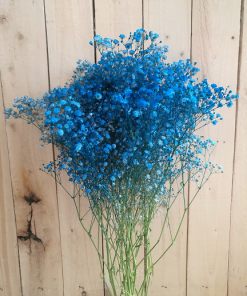 Baby's Breath Gypsophila Blue