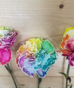 Tinted Happy Carnations 1