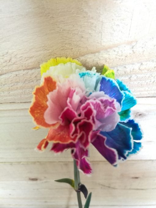 Tinted Happy Carnations 3
