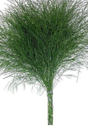 TreeFernGreen
