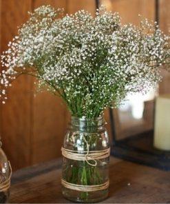 babysbreatflowers