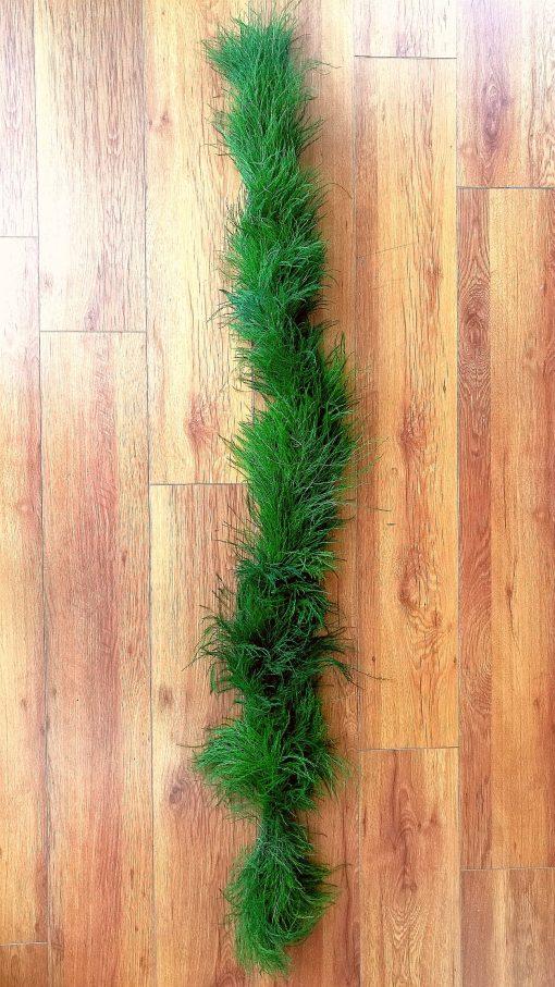 Tree Fern 2