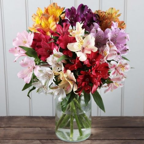 amazonflowers.us fresh peruvian lilies alstroemeria alstroemeria asst
