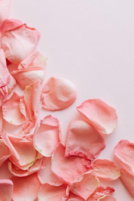 amazonflowers.us petals scaled