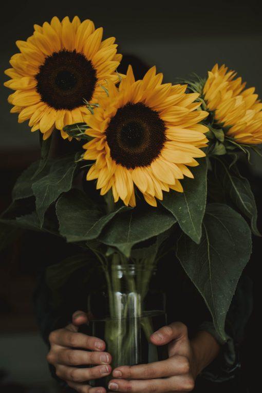 amazonflowers.us sunflowers scaled